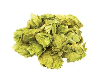 Whole hops Cones for Storage